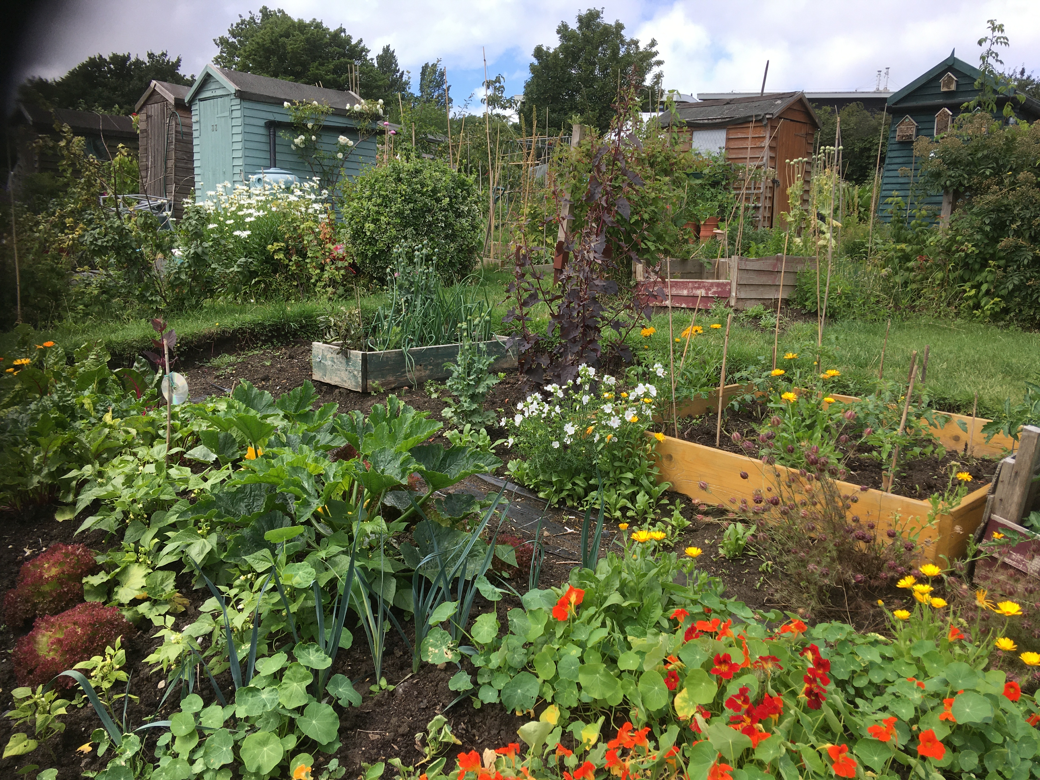 Dr Steiner's Allotment